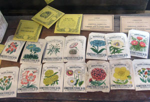 Comstock Ferre was the first to offer color illustrations on seed packets.