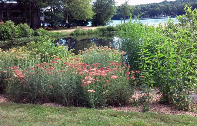 See The Lake Hayward Garden Web Site.
