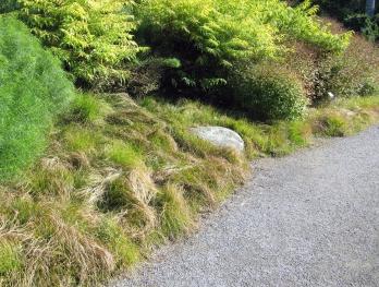 Appalachian sedge forms a dense border beneath amsonia and sumac.
