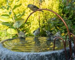 Goldfinches visit birdbath, photo by Tony Bacewicz
