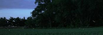 Photo: Fireflies, by Daniel Schwen, Wikimedia CC