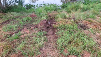 Tractor tires destroyed a young meadow after a mower mistakes tall native plants for weeds.