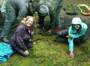 Annie Martin of Mountain Moss in Brevard, NC, creates a winter moss garden.