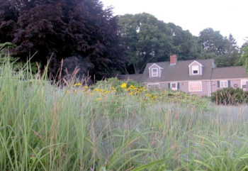 Front yard meadow at Kathy Connolly's house.