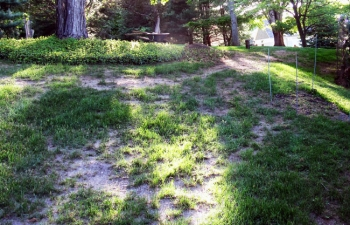 The homeowner used a moss killer and tried to grow grass on a shady slope.