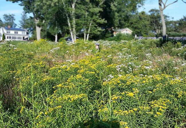 Flowering meadow