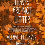 Leaves are not litter by Xerces Society