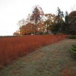 Broomsedge meadow grasses and pathway on November 4, 2015