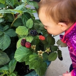 Baby girl visits a container-grown raspberry. Photo by www.bushelandberry.com